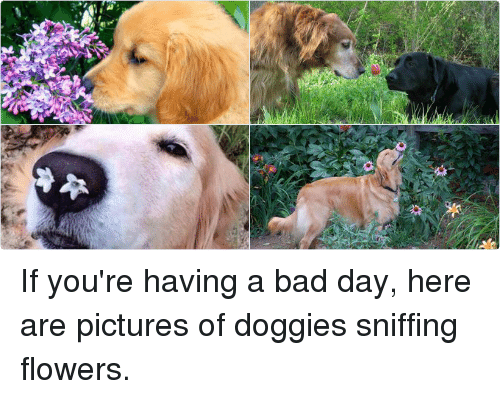 Bad Day Meme Funny : Is if you re having a bad day here are pictures of doggies