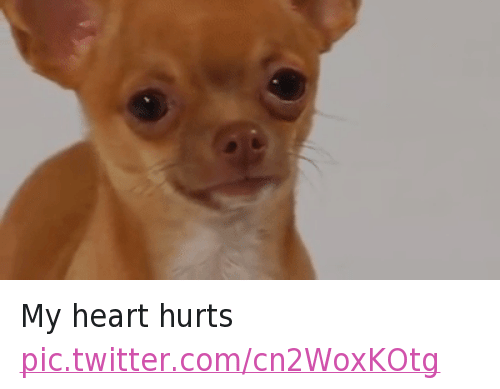 Twitter My heart hurts a47741 my heart hurts funny meme on me me