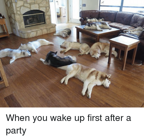 Twitter When you wake up first after 83073c - Free funny after party photos