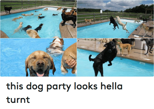 Fun Dog Meme : This dog party looks hella turnt animals meme on me.me