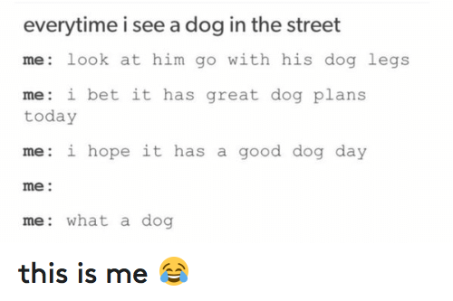 Dogs, Funny, and I Bet: everytime i see a dog in the street  me look at him go with his dog legs  me: i bet it has great dog plans  today  me: i hope it has a good dog day  me  me: what a dog this is me 😂
