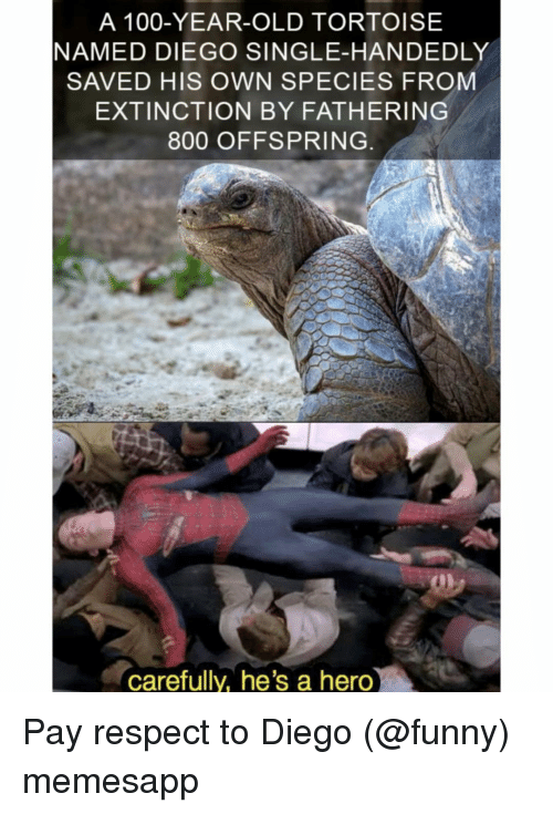 Anaconda, Funny, and Memes: A 100-YEAR-OLD TORTOISE  NAMED DIEGO SINGLE-HANDEDLY  SAVED HIS OWN SPECIES FROM  EXTINCTION BY FATHERING  800 OFFSPRING  carefully, he's a hero Pay respect to Diego (@funny) memesapp