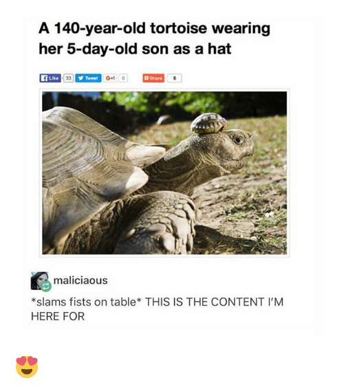 Memes, Content, and Old: A 140-year-old tortoise wearing  her 5-day-old son as a hat  Like  Tweet  Gl 0  Sharo  maliciaous  *slams fists on table* THIS IS THE CONTENT I'M  HERE FOR 😍