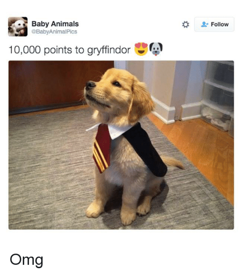 a baby animal pics animals baby 10 000 points to gryffindor 7440091 25 best baby animals memes anime post memes, the memes, baby