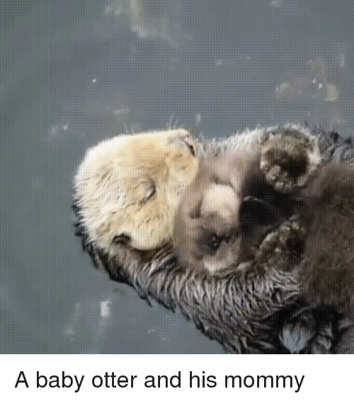 Sleeping, Mom, and Baby: A baby otter and his mommy