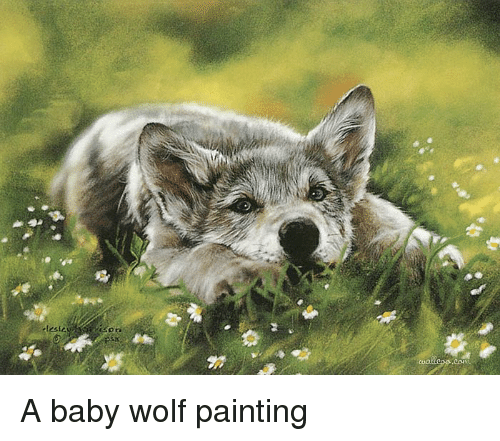 a baby wolf painting wolf meme on