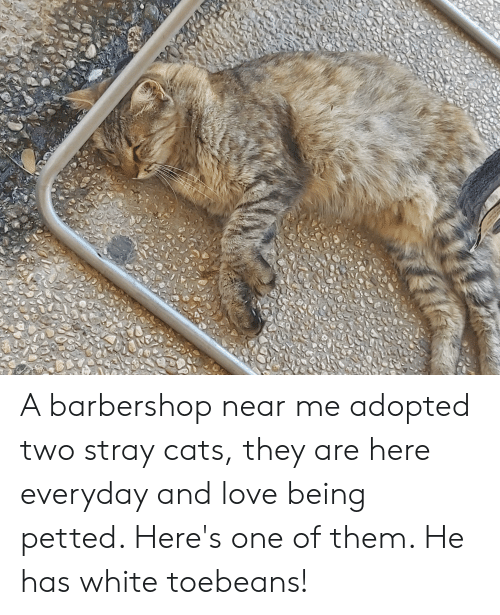A Barbershop Near Me Adopted Two Stray Cats They Are Here