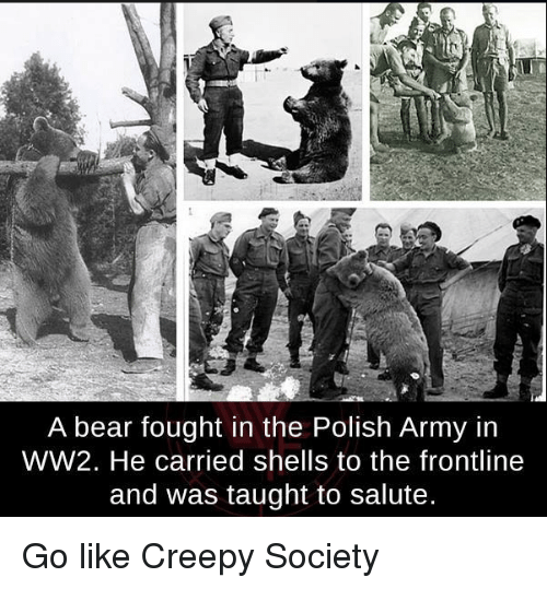 a-bear-fought-in-the-polish-army-in-ww2-he-19806371.png