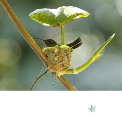 Aww, Beautiful, and Reddit: A beautiful Hummingbird's nest with a leaf roof..🕊️(via)