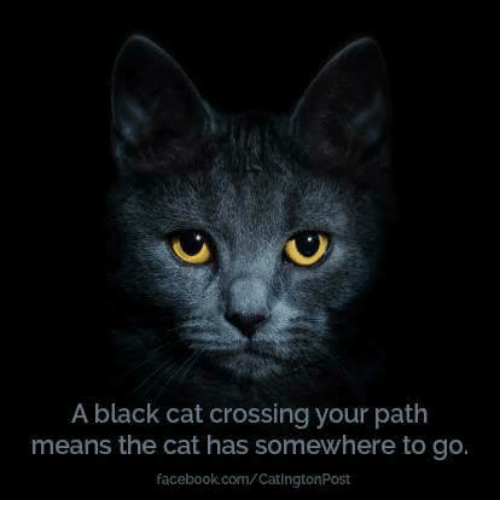 Black cat cross my path and then 9