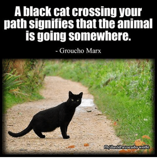 Black cat cross my path and then 6