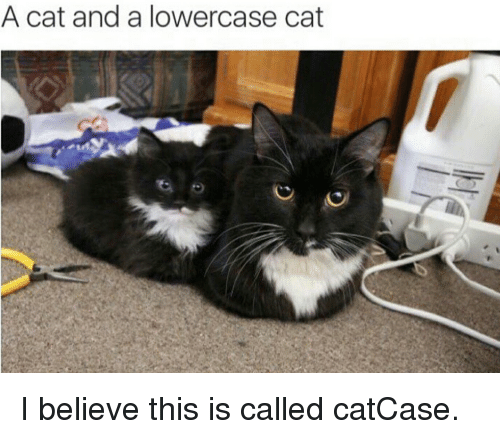 a cat and a lowercase cat i believe this is called catcase cats