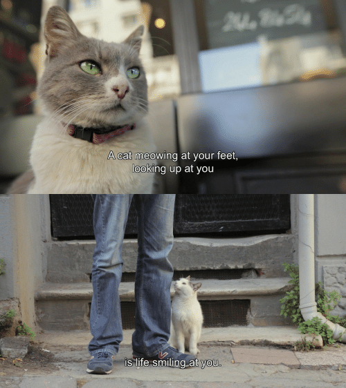 Life, Feet, and Cat: A cat meowing at your feet  looking up at you   is life smiling at vou