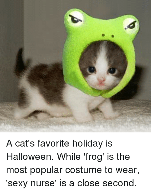 A Cats Favorite Holiday Is Halloween While Frog Is The Most