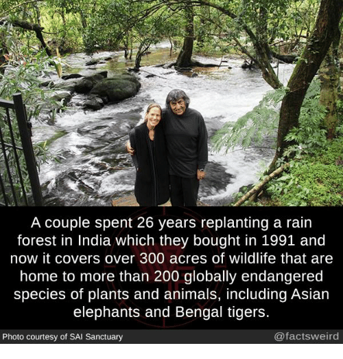 Animals, Asian, and Bailey Jay: A couple spent 26 years replanting a rain  forest in India which they bought in 1991 and  now it covers over 300 acres of wildlife that are  home to more than 200 globally endangered  species of plants and animals, including Asian  elephants and Bengal tigers  Photo courtesy of SAI Sanctuary  @factsweird