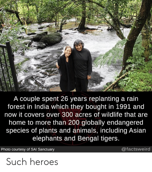 Animals, Asian, and Covers: A couple spent 26 years replanting a rain  forest in India which they bought in 1991 and  now it covers over 300 acres of wildlife that are  home to more than 200 globally endangered  species of plants and animals, including Asian  elephants and Bengal tigers.  @factsweird  Photo courtesy of SAI Sanctuary Such heroes