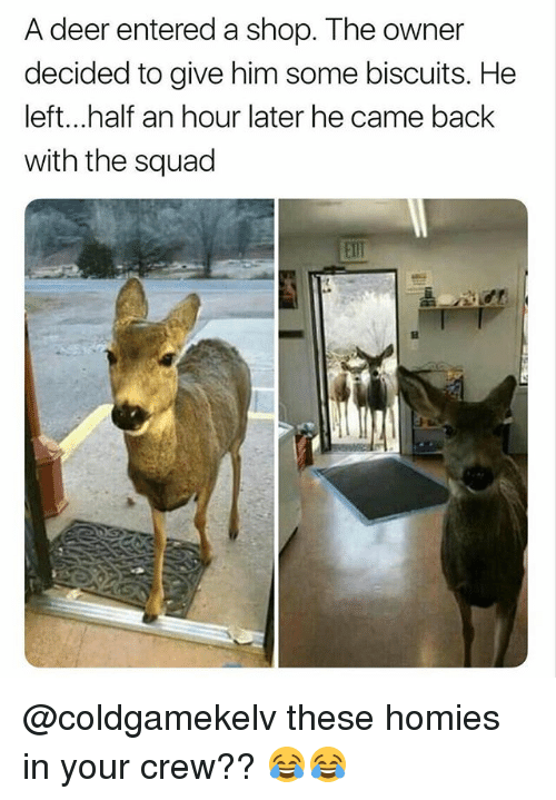 Deer, Funny, and Squad: A deer entered a shop. The owner  decided to give him some biscuits. He  left...half an hour later he came back  with the squad  Elll @coldgamekelv these homies in your crew?? 😂😂