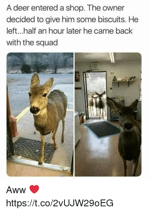 Aww, Deer, and Squad: A deer entered a shop. The owner  decided to give him some biscuits. He  left...half an hour later he came back  with the squad  Ell Aww ❤ https://t.co/2vUJW29oEG