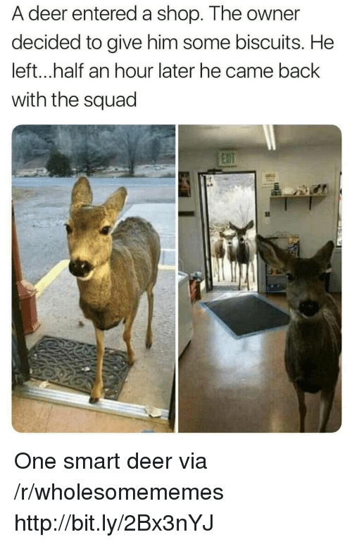 Deer, Squad, and Http: A deer entered a shop. The owner  decided to give him some biscuits. He  left...half an hour later he came back  with the squad One smart deer via /r/wholesomememes http://bit.ly/2Bx3nYJ