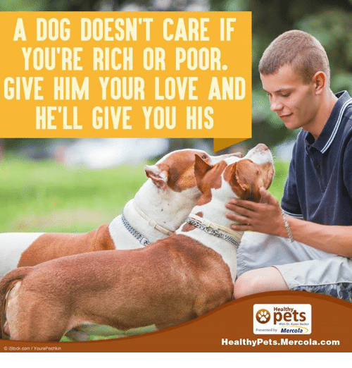 Memes, 🤖, and Mercola: A DOG DOESNT CARE IF  YOU'RE RICH OR POOR  GIVE HIM YOUR LOVE AND  HELL GIVE YOU HIS  Healthy  Presentedby Mercola  Healthy Pets Mercola.com  oistock com/Y