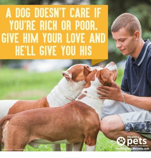 Memes, 🤖, and Becker: A DOG DOESNT CARE IF  YOU'RE RICH OR POOR  GIVE HIM YOUR LOVE AND  HELL GIVE YOU HIS  com PYouraP  Healthy  With Dr. Karen Becker  Healthy Pets.Mercola.com
