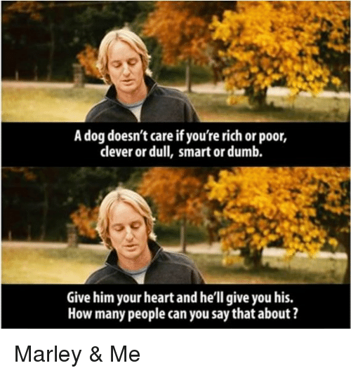 Marley And Me Quotes A Dog Doesnt Care Traffic Club