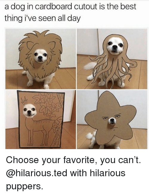 Memes, Ted, and Best: a dog in cardboard cutout is the best  thing i've seen all day Choose your favorite, you can't. @hilarious.ted with hilarious puppers.
