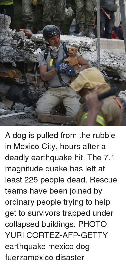 Memes, Earthquake, and Help: A dog is pulled from the rubble in Mexico City, hours after a deadly earthquake hit. The 7.1 magnitude quake has left at least 225 people dead. Rescue teams have been joined by ordinary people trying to help get to survivors trapped under collapsed buildings. PHOTO: YURI CORTEZ-AFP-GETTY earthquake mexico dog fuerzamexico disaster