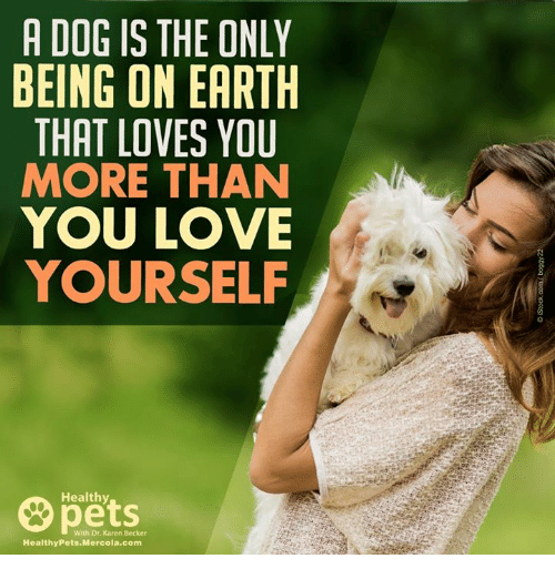 Memes, 🤖, and Mercola: A DOG IS THE ONLY  BEING ON EARTH  THAT LOVES YOU  MORE THAN  YOU LOVE  YOURSELF  Healthy  Healthy Pets Mercola.com