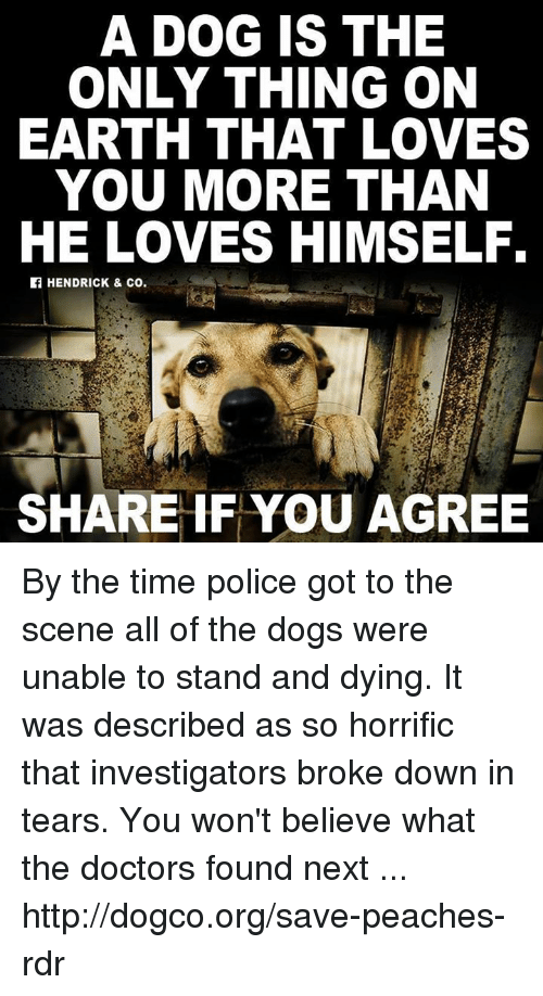 Dogs, Memes, and Police: A DOG IS THE  ONLY THING ON  EARTH THAT LOVES  YOU MORE THAN  HE LOVES HIMSELF.  HENDRICK & co.  SHARE IF YOU AGREE By the time police got to the scene all of the dogs were unable to stand and dying. It was described as so horrific that investigators broke down in tears. You won't believe what the doctors found next ... http://dogco.org/save-peaches-rdr