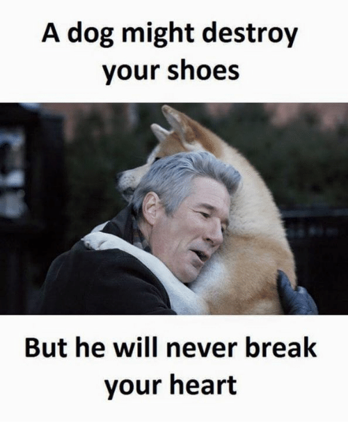 Dog, Destroyer, and Dogging: A dog might destroy  your shoes  But he will never break  your heart