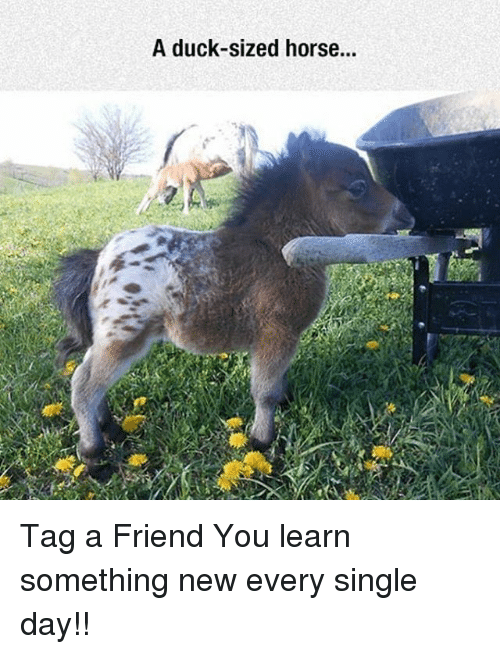 A Duck-Sized Horse Tag a Friend You Learn Something New