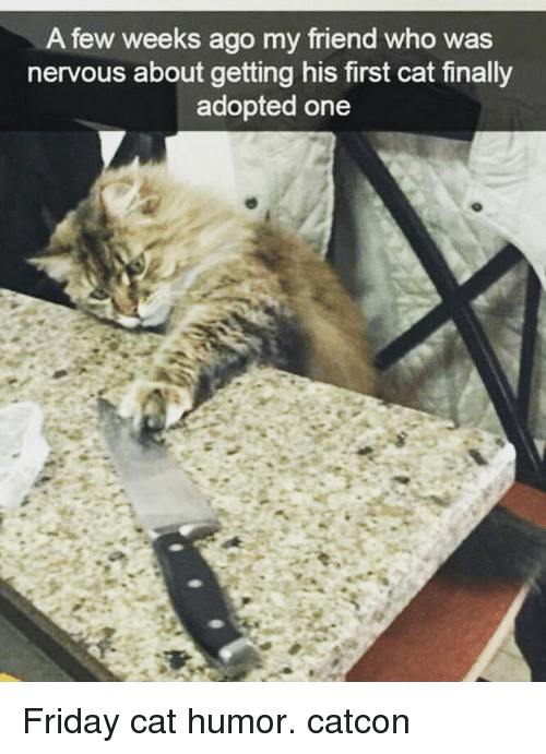 Memes, 🤖, and Cat: A few weeks ago my friend who was  nervous about getting his first cat finally  adopted one Friday cat humor. catcon