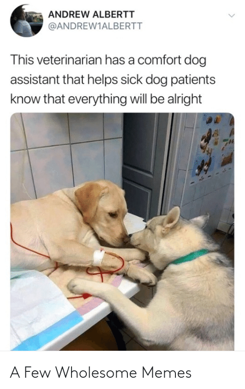 Memes, Wholesome, and Wholesome-Memes: A Few Wholesome Memes
