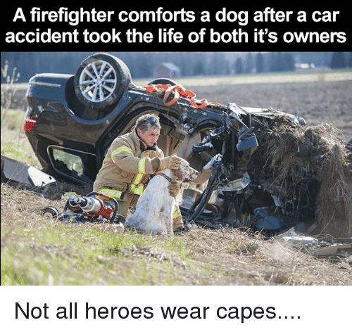 a firefighter comforts a dog after a car accident took 4913305 ✅ 25 best memes about firefighter firefighter memes
