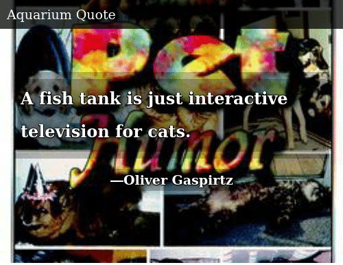 A Fish Tank Is Just Interactive Television for Cats | Donald Trump