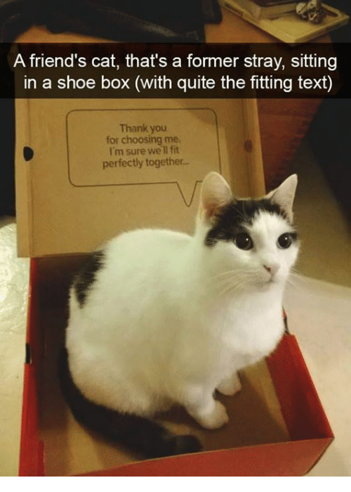 Boxing, Cats, and Friends: A friend's cat, thats a former stray,