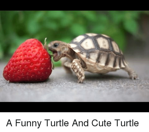 a funny turtle and cute turtle 4841623 ✅ 25 best memes about cute turtle cute turtle memes