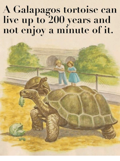 Bailey Jay, Live, and Nihilist: A Galapagos tortoise can  live up to 200 years and  not enjov a minute of it.