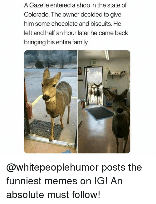Family, Funny, and Meme: A Gazelle entered a shop in the state of  Colorado. The owner decided to give  him some chocolate and biscuits. He  left and half an hour later he came back  bringing his entire family.  alif @whitepeoplehumor posts the funniest memes on IG! An absolute must follow!