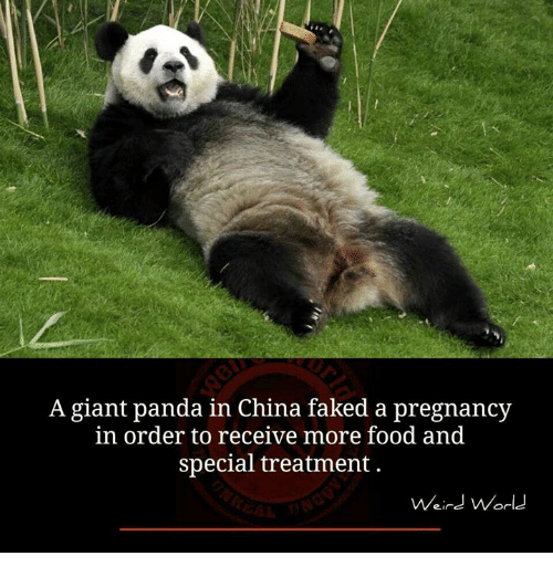 giant panda biography Bao is a young giant panda who resides in the secret panda village he is a new character that will make his first appearance in the upcoming film, kung fu panda 3.