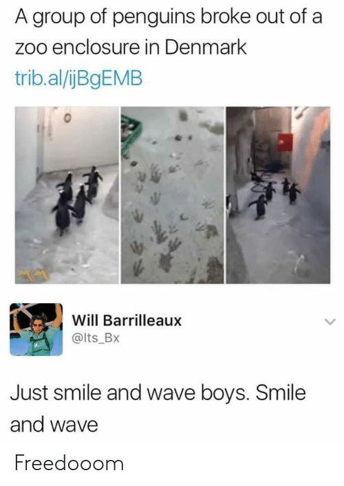 Denmark, Penguins, and Smile: A group of penguins broke out of a  zoo enclosure in Denmark  trib.al/ijBgEMB  Will Barrilleaux  @lts_Bx  Just smile and wave boys. Smile  and wave Freedooom