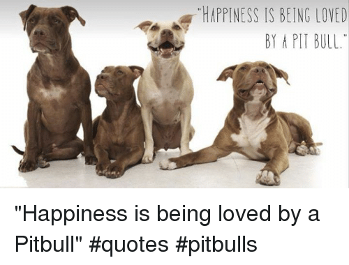 A HAPPINESS IS BEING LOVED BY a PIT BULL Happiness Is Being ...