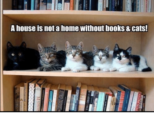 Books, Cats, and Memes: A house is not a home without books & cats!