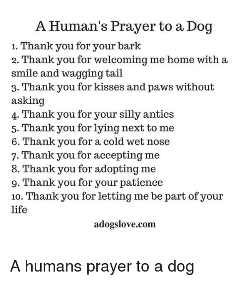 A Human S Prayer To A Dog 1 Thank You For Your Bark 2 Thank You For