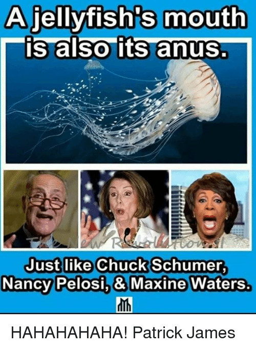 Memes, 🤖, and Chuck: A jellyfish's mouth  is also its anus.  Justlike Chuck Schumer  NancyPelosi,& Maxine Waters. HAHAHAHAHA!  Patrick James