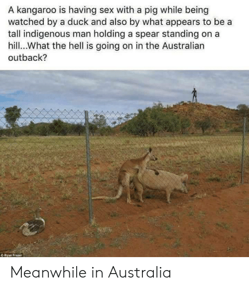 Sex, Australia, and Duck: A kangaroo is having sex with a pig while being  watched by a duck and also by what appears to be a  tall indigenous man holding a spear standing  hill.What the hell is going on in the Australian  outback?  ORyan Frazer Meanwhile in Australia
