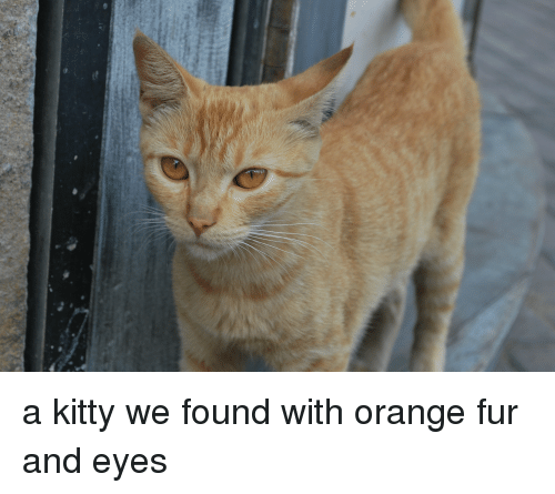 Orange, Fur, and Kitty: a kitty we found with orange fur and eyes