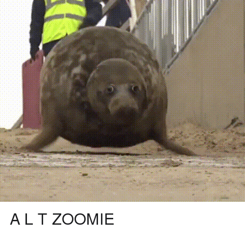 Boi, L&t, and Zoomie: A L T ZOOMIE