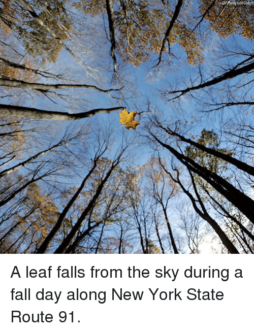 Fall, Memes, and New York: A leaf falls from the sky during a fall day along New York State Route 91.